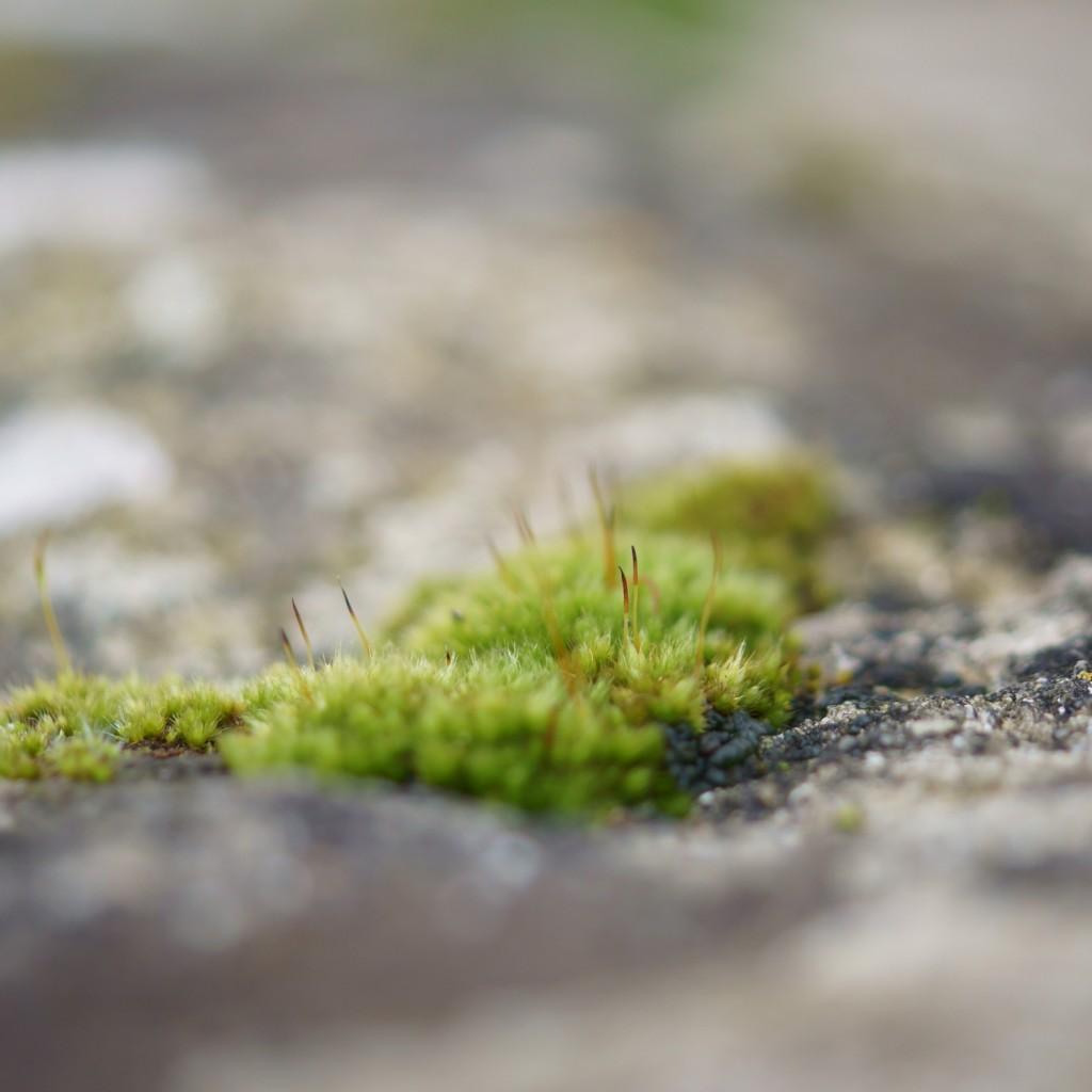 mousse & lichen (1)