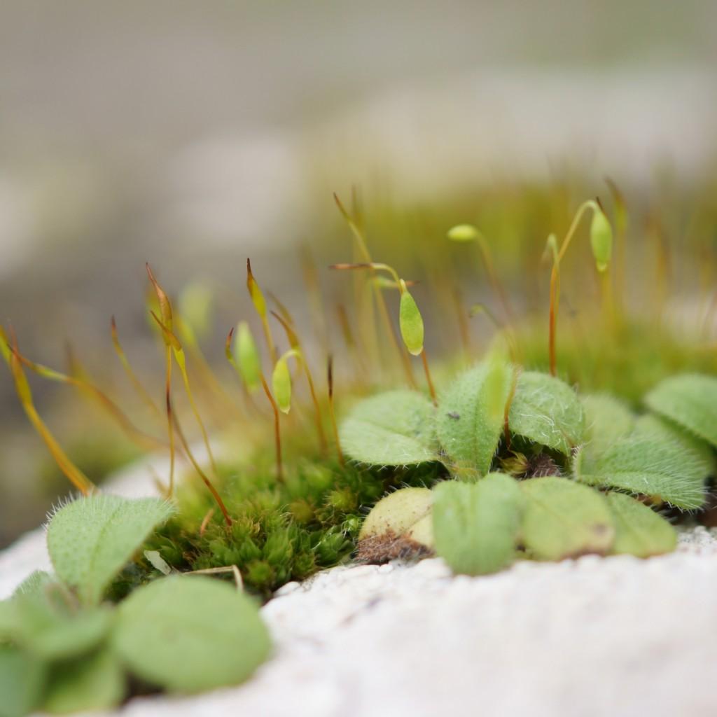 mousse & lichen (4)