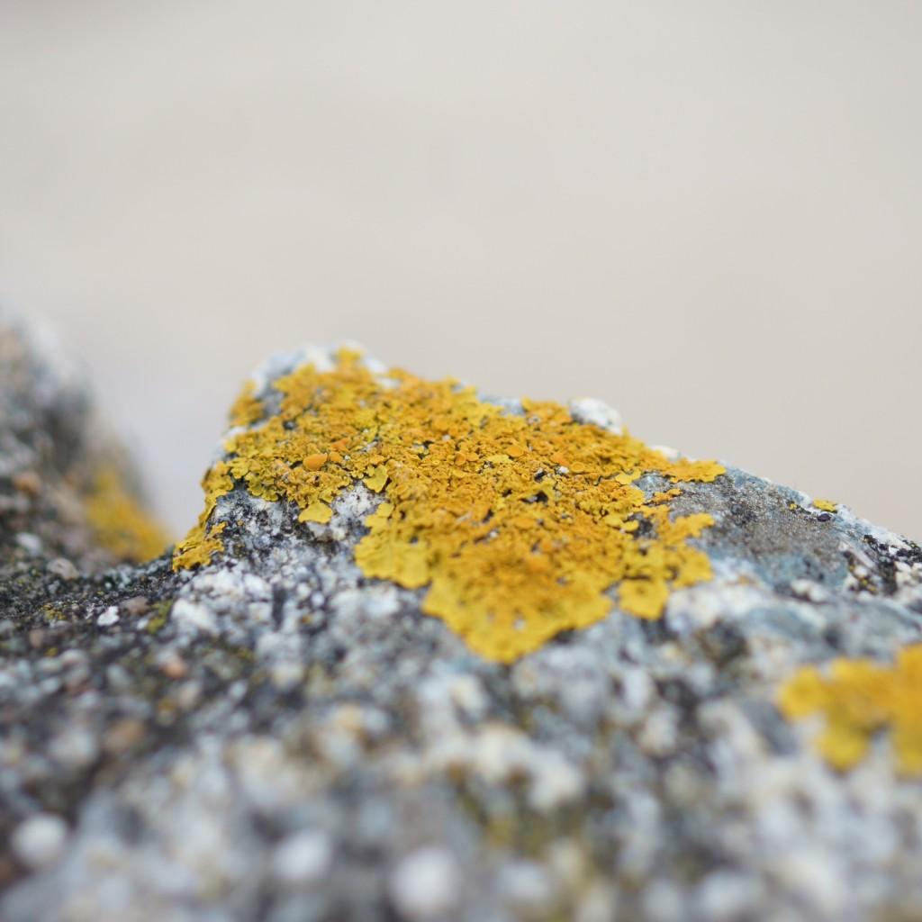 mousse & lichen (5)