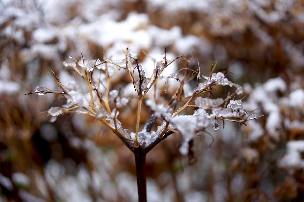 neige février