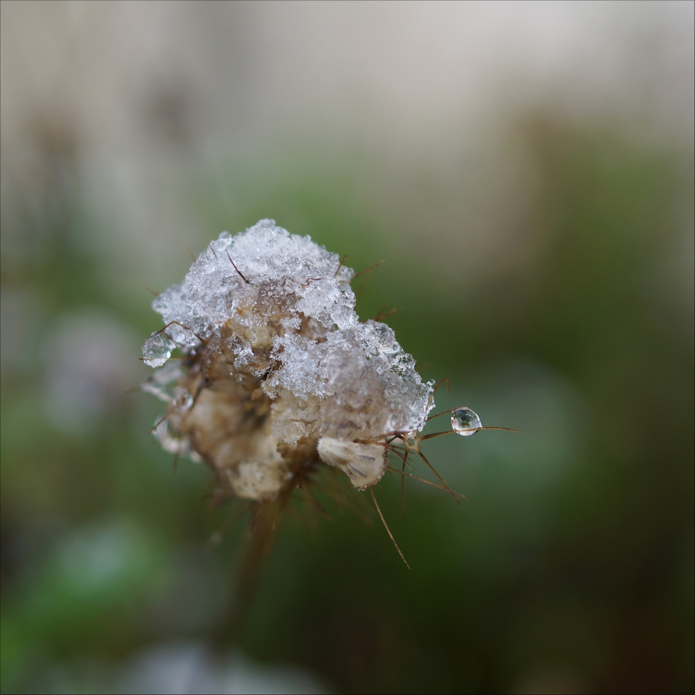 neige_3 février (1)