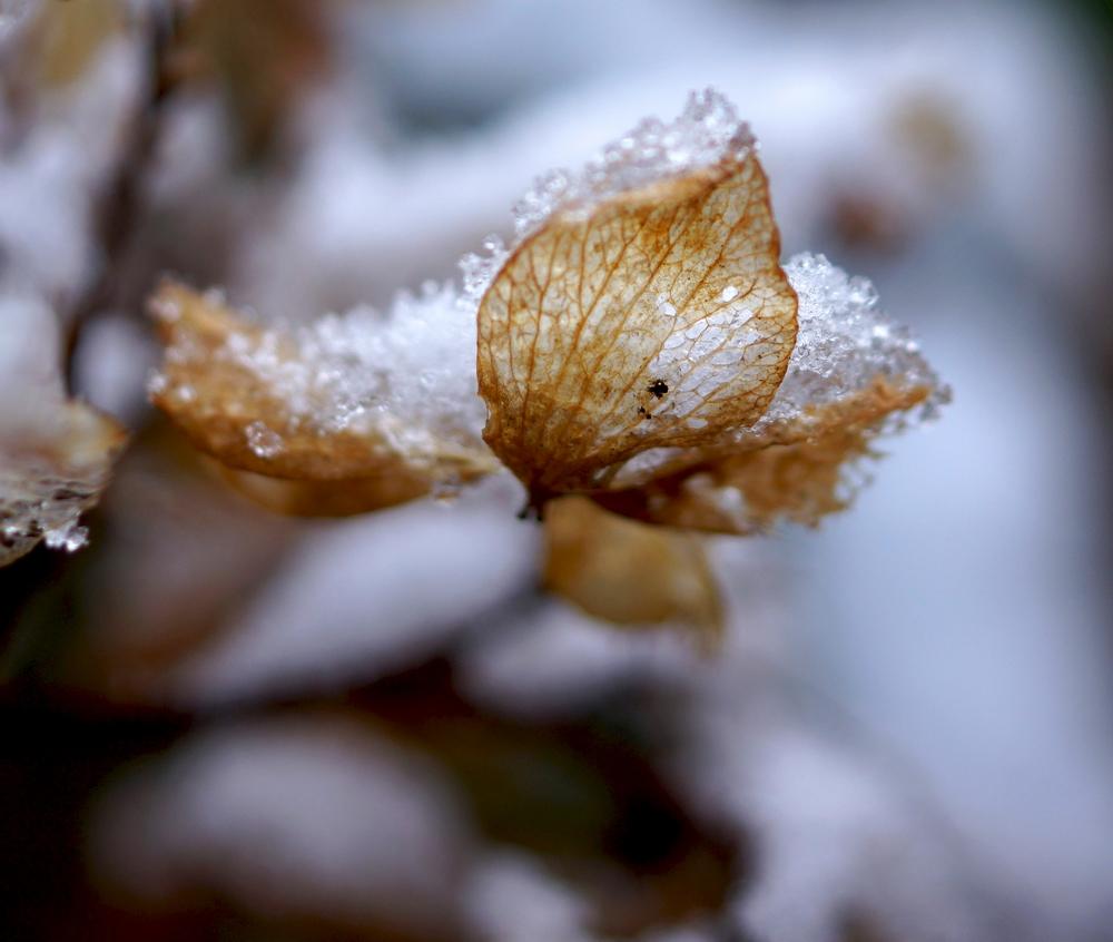 neige_3 février (3)