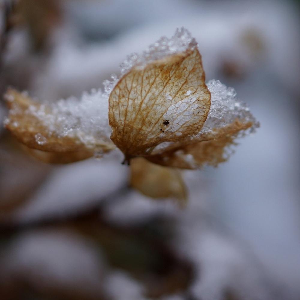 neige_3 février (5)