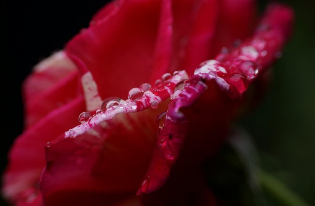 pluie sur Brocéliande (3)