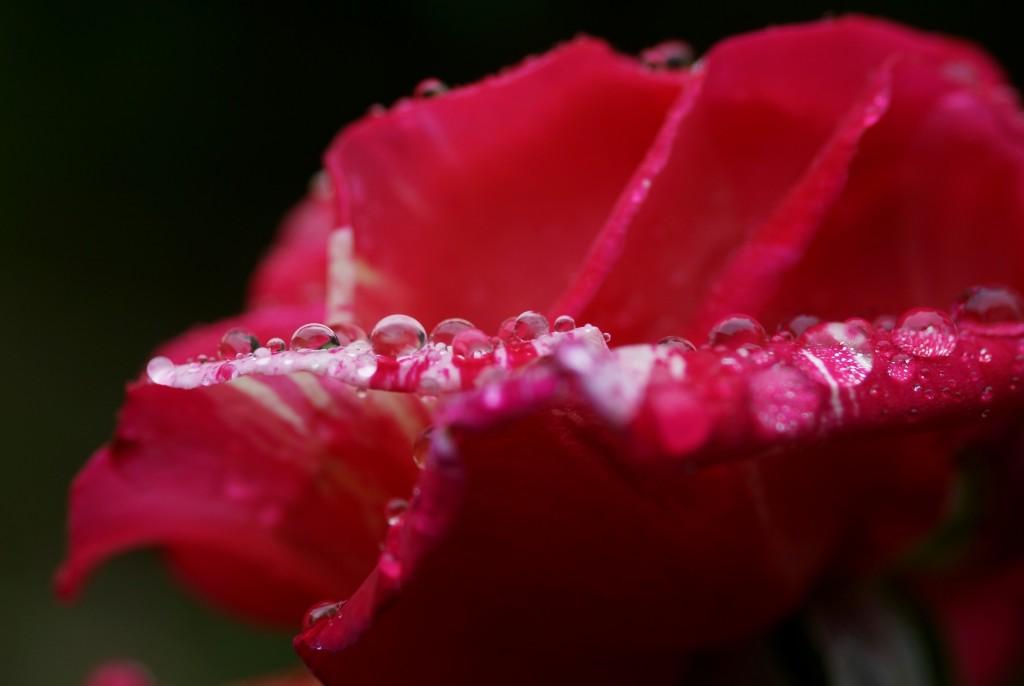 pluie sur Brocéliande (8)