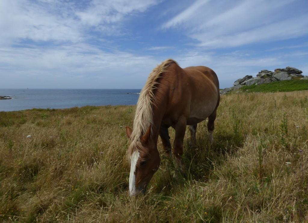 chevaux (1)