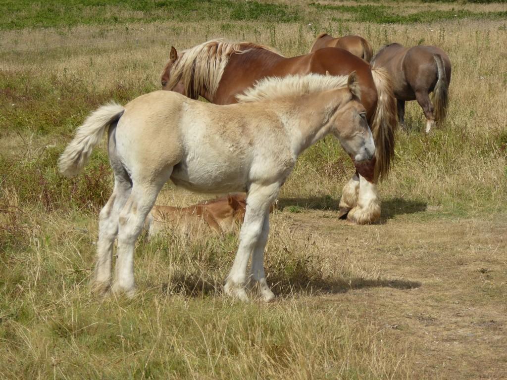 chevaux (11)