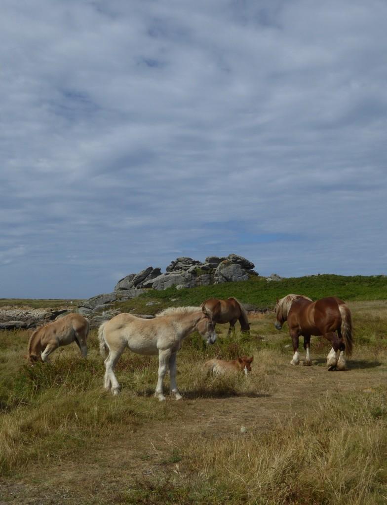 chevaux (12)
