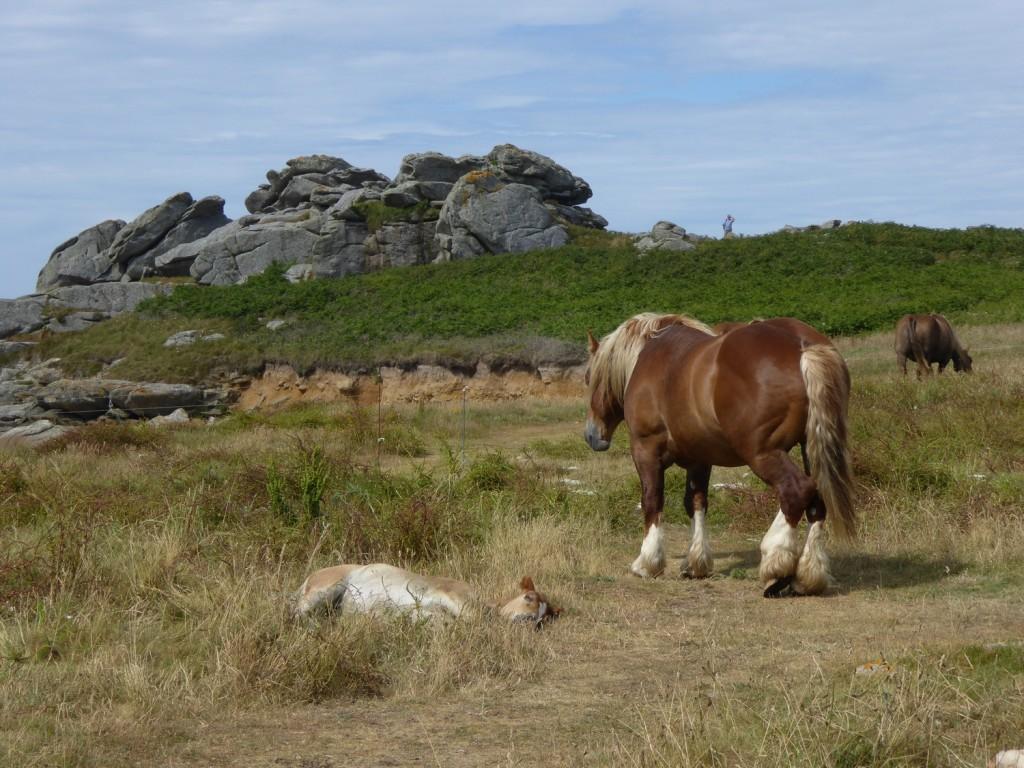 chevaux (14)