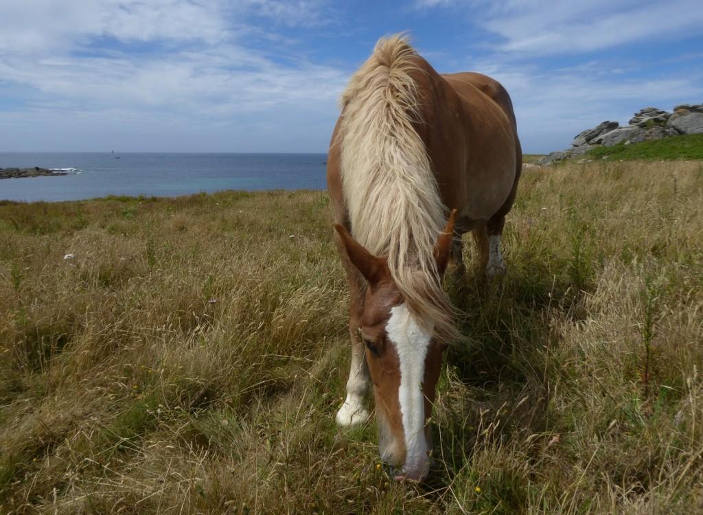 chevaux (2)