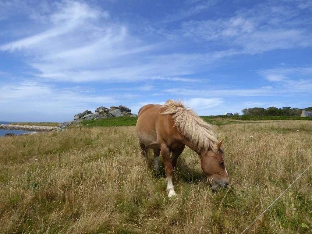 chevaux (3)