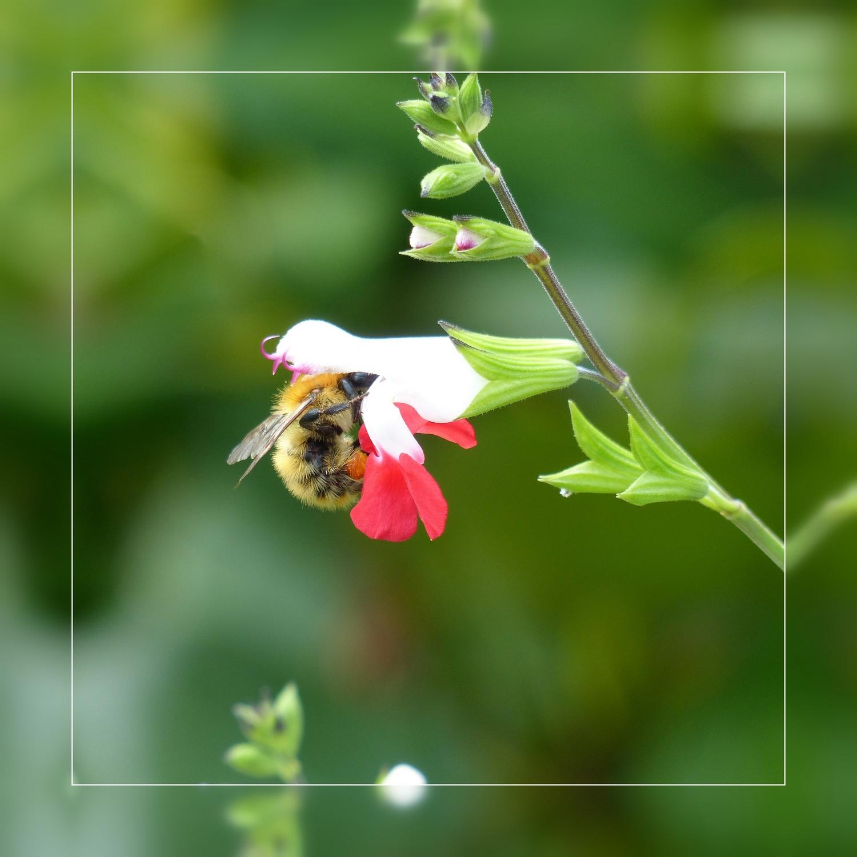 Les insectes au jardin capteuse - Reconnaitre les insectes xylophages ...