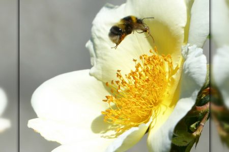 Insectes au jardin (6)